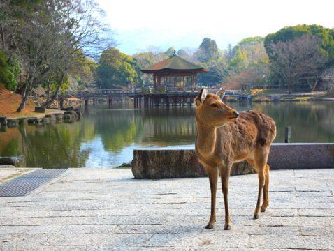 奈良1日游 (8小时)