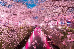 Let's Enjoy Cherry Blossoms in Tokyo! Vol.1 ~ East Tokyo~