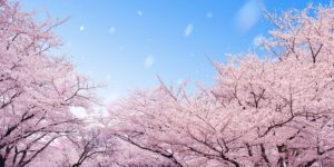 Enjoy Cherry Blossoms in Osaka! Vol.1 ~ Osaka ~