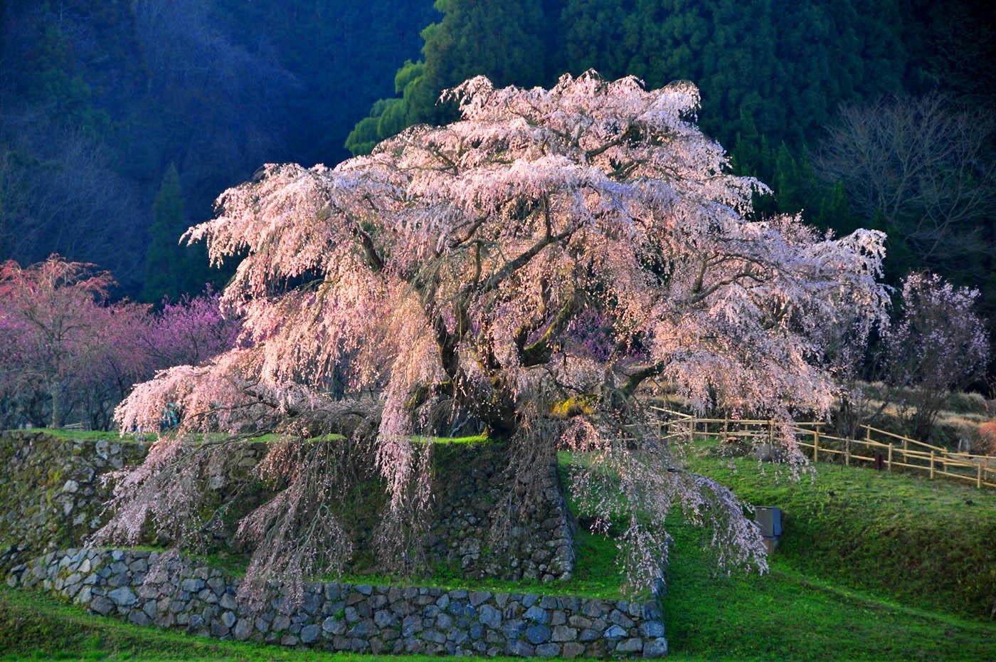 Kyoto Visitors GuideDining