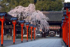 日本文化が息づく古都・京都・奈良で桜を見よう Vol.1~京都編~