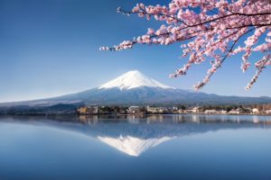 Let's have the ultimate cherry blossom experience! – Fuji and Hakone