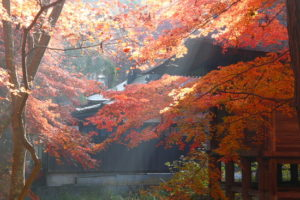 The wonders of nature! Let's see the autumn leaves in Japan! ~ Northern Japan ~