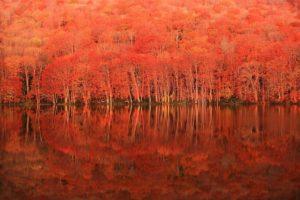 自然の織りなす絶景!日本の紅葉を見に行こう! ~西日本編~